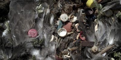These Birds Are Choking On A Plastic Ocean – CNN.com